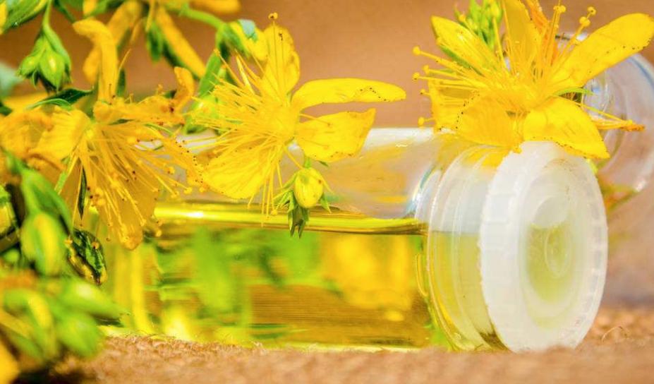 研究首次证实水仙花具有抗肿瘤活性