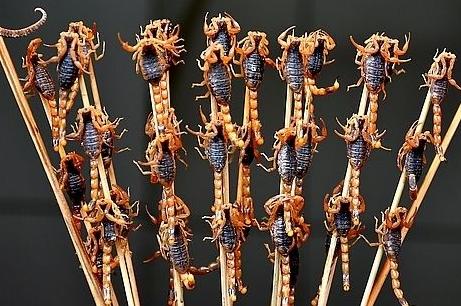 中药蝎子的养生保健作用