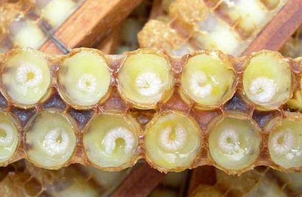 蜂王浆的食用方法_蜂王浆吃法