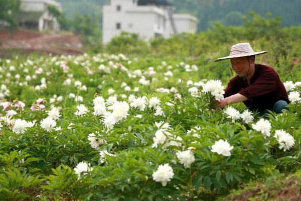 甘肃省将打造全国中医药原料保障供应基地