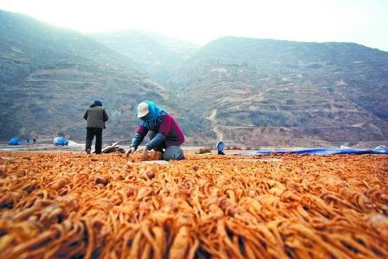 云南省中药材种植面积保持全国领先