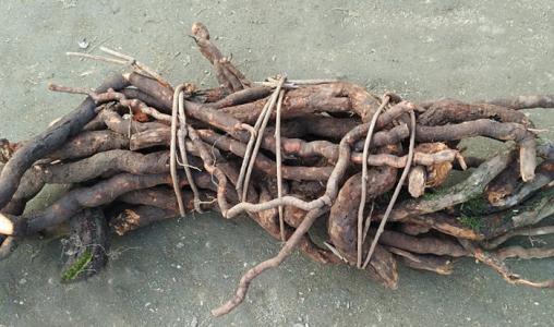 猕猴桃根的炮制方法