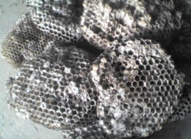 蜜蜂房的功效与作用