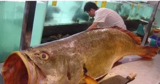 世界上最贵的三种鱼,黄唇鱼只排第二