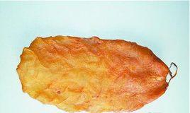 为什么黄唇鱼花胶一斤能卖几十万