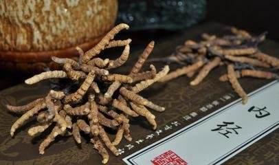 新鲜冬虫夏草怎么吃效果最好 _冬虫夏草的吃法