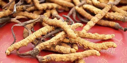 过敏体质的病人能吃冬虫夏草吗? _冬虫夏草的吃法