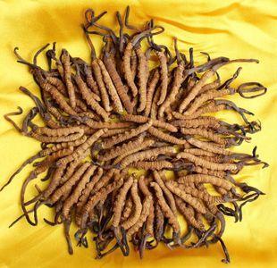 服用冬虫夏草可搭配其他中药材吗 _冬虫夏草的吃法