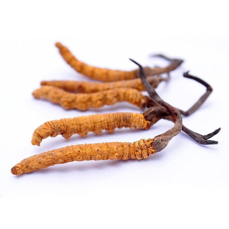 冬虫夏草需要每天都吃吗?_冬虫夏草的吃法