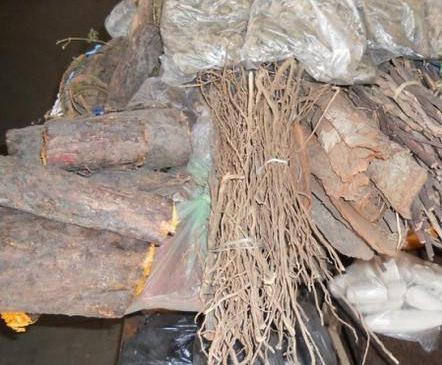 卡宾达树皮和枸杞哪个壮阳效果更好_卡宾达树皮