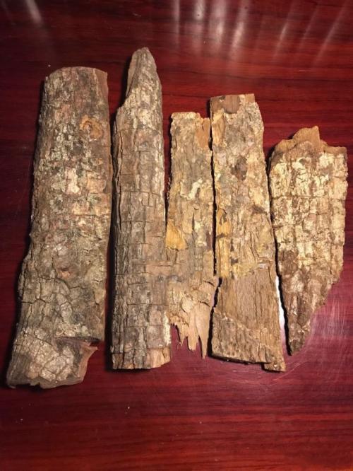 肾虚时卡宾达树皮能帮你大忙_卡宾达树皮的功效