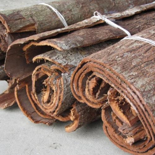 女性吃卡宾达树皮可以调节内分泌失调_卡宾达树皮的功效
