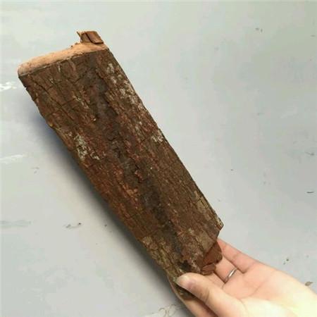 女性吃卡宾达树皮可以治疗冷淡吗_卡宾达树皮的功效