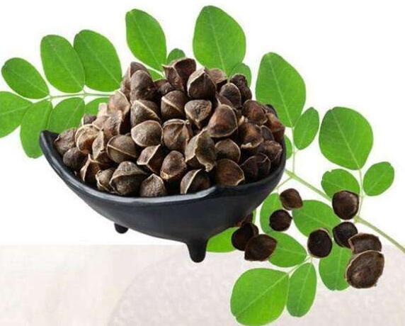 辣木籽的食用禁忌