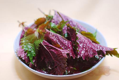 紫苏的食用禁忌,紫苏哪些人不能吃