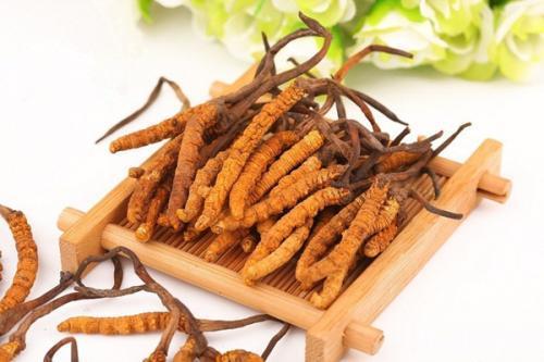 冬虫夏草怎么吃好,冬虫夏草正确的食用方法